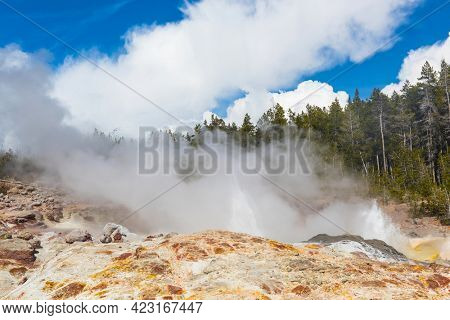 Steamboat geyser venting steam and little water. It is considered as tallest active geyser in the world . Norris Geyser Basin, Yellowstone National Park, USA