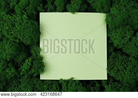 Moss Seamless Texture, Green Preserved Moss For Decor In The Office On The Wall Generic Concept Imag