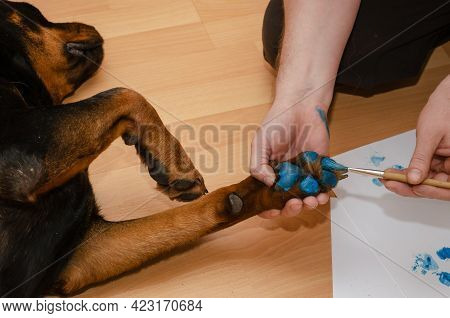 A Man And His Dog Are Lying On The Floor Of The Living Room. A Hand Brushes A Rottweilers Paw With B