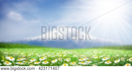 Green grass field with chamomile flowers in front of Ararat mountain in snow. Sunny summer countryside landscape