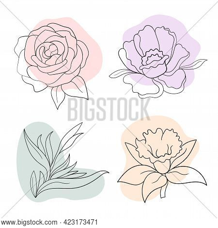 Vector Line Black Illustration Graphics Flowers: Peony, Rose, Strelitzia, Daffodil With Colors Stain