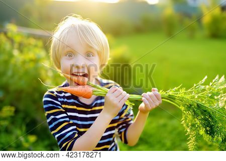 Happy Little Boy Helps Family To Harvest Of Organic Homegrown Vegetables At Backyard Of Farm. Child