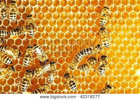 Close up view of the working bees on honey cells.