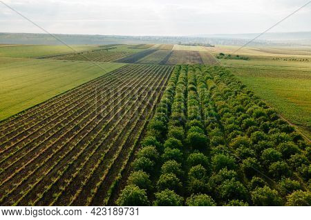Aerial View Landscape Orchard With Agricultural Fields Around. Flying Over Green Plantations Of Frui
