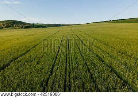 Aerial View Top View Of A Wheat Field. Flying Over A Field Agricultural Land. Modern Agriculture. Be
