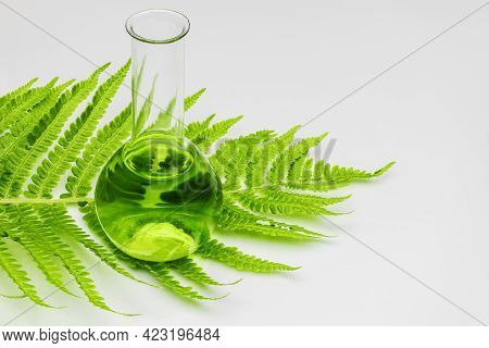 A Glass Laboratory Test Tube Stands On A Leaf Of A Young Fern On A White Background. Biotechnology R