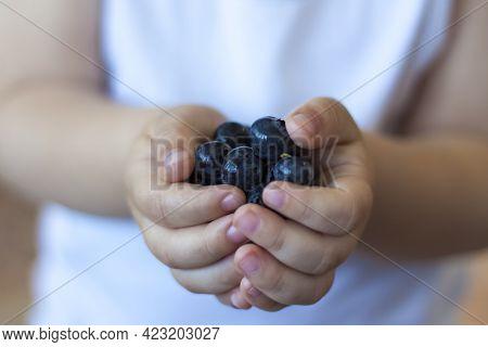 Ripe Organic Blueberries In Children's Hands. Ripe Berries. Blueberries In The Palms Of The Child