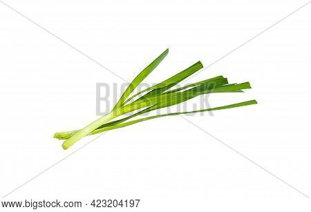 The Chives Are Collected For Cooking. Clipping Path.