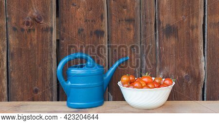 Harvest Red Tomatoes In White Bowl Next Blue Watering Can. Gardening Fresh And Juicy Vegetables From