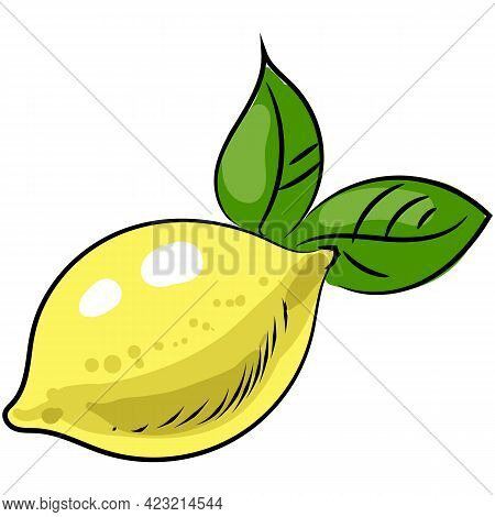 Vector Lemon Illustration Citrus Fruit Icon Isolated
