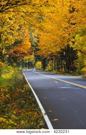 Fall Roadside In The Pacific Northwest