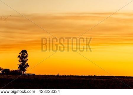 Colorful Hues Of The Evening In The Fields Of The Pampa Biome In Southern Brazil.