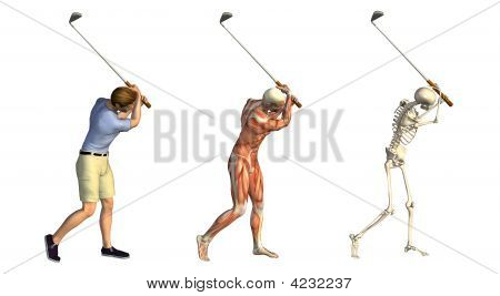 Anatomical Overlays Golf Swing