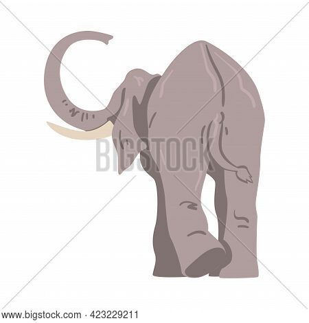 Elephant As Large African Animal With Trunk, Tusks, Ear Flaps And Massive Legs Vector Illustration