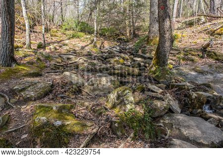Along The Rocky Trail In The Woodlands A Small Stream Of Sparse Flow Of Water Going Down The Mountai