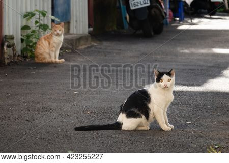 stray cat stand and look at you in the lane of city