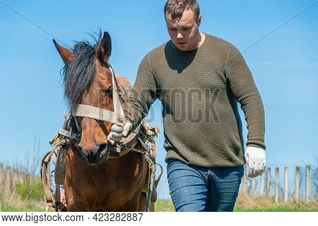 Man Holds A Horse By The Bridle And Leads It Through A Field On A Sunny Day