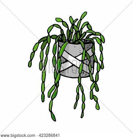 Home Plants. Vector Houseplants, Icons. Linear Illustration Artistic Lines And Strokes. Succulent In