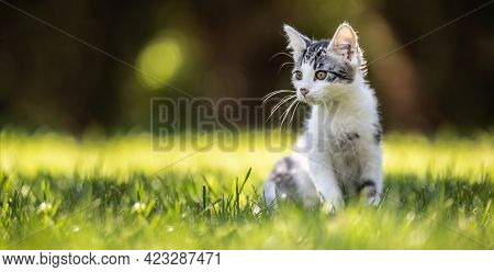 A Little Kitty Cat Sitting On A Grass In The Garden. She Has Fluffy Fur And Sharp Ears And Curious M