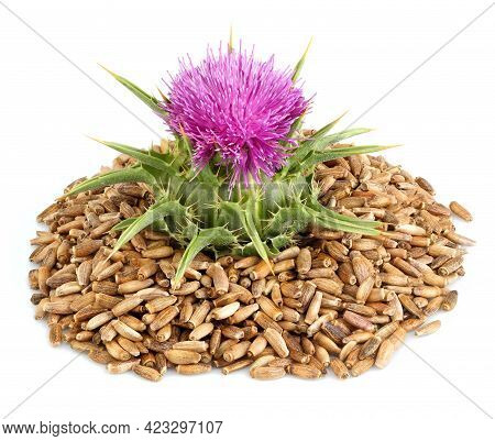 Seeds Of A Milk Thistle With Flowers.silybum Marianum, Scotch Thistle, Marian Thistle. Closeup.