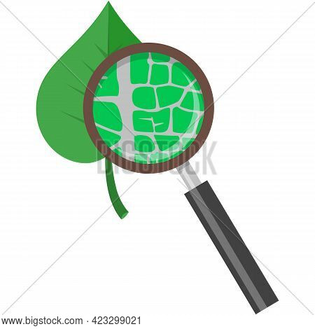 Leaf Under Magnifying Glass Loupe Icon Vector