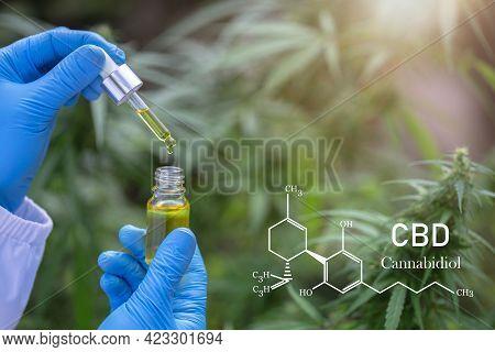 Hand Holding A Tube Of Cannabis Oil.concept Hemp Oil, Cbd Chemical Formula,  Medical Herb Concept. C