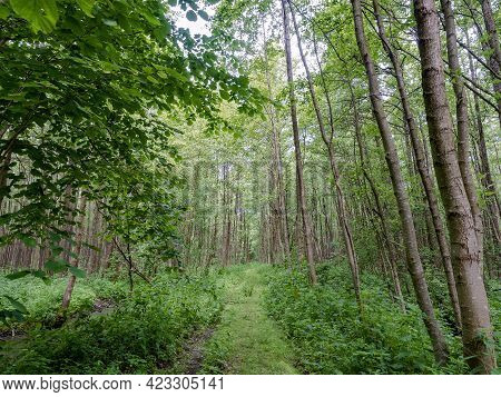 A Forest Trail In The Thicket. The Forest In Summer. A Walk In A Summer Forest.