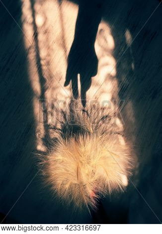 Dry Fluffy Feather Grass Or Needle Grass And Shadow Of Female Hand On Grunge Wall Background. Abstra