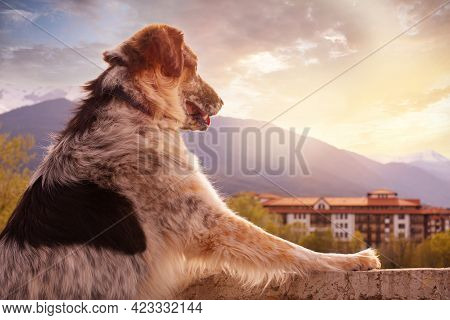 Big Dog Standing And Overlooking Sunset Town Houses And Mountains In Bansko, Bulgaria