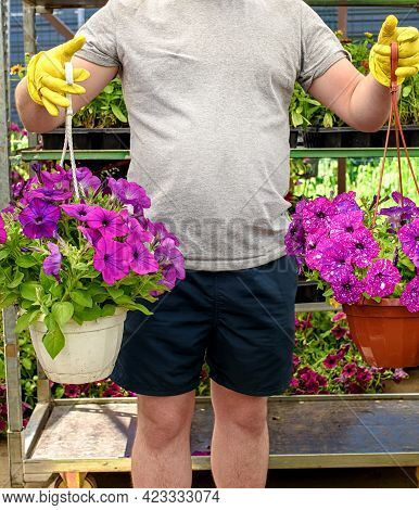 Garden Center Worker Holds A Pot Of Beautiful Lilac Petunias. Preparing For The Summer Season