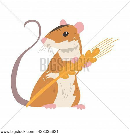 Striped Field Mouse As Small Rodent With Long Tail Holding Spikelet Vector Illustration