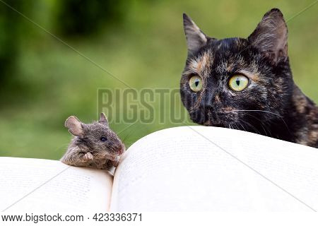 A Cat And A Mouse Near An Open Book, A Cat Watching A Mouse. Reading A Book