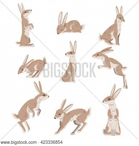 Hares And Jackrabbits As Swift Animal With Long Ears And Grayish Brown Coat Vector Set