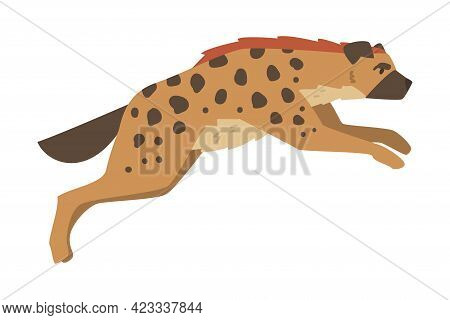 Hyena As Carnivore Mammal With Spotted Coat And Rounded Ears Running Vector Illustration