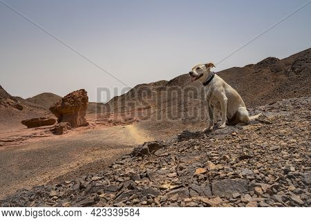 A Domestic Dog In The Timna Valley Desert Park, Israel, Known For Unique Rock Formations.