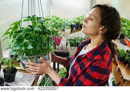 Side View Of A Young Hispanic Woman Gardener Spending Time In A Country Greenhouse Nursery Cultivati