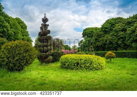 Beautiful Topiary Art In Park Design. Trimmed Trees And Shrubs In A Summer City Park. Evergreen Land