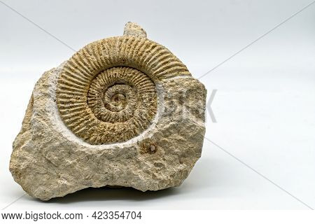 Fossil Of Ammonite Isolated On White Background With Copy Space