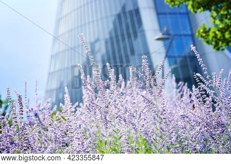 Lavender In Front Of Generali Tower Or Hadid Tower In Citylife Area, Skyscraper Completed In 2017 In