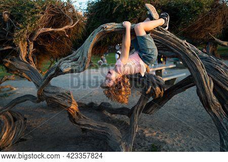 Kid Climbing Tree. Caucasian Boy Happily Lying Upside Down In A Tree Hugging A Big Branch.