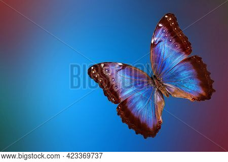 Bright Blue Tropical Morpho Butterfly On Abstract Blurred Background