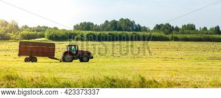 Belarus, Vitebsk, June 2020. Tractor With A Trailer In The Field For Agricultural Work. Hay Making,