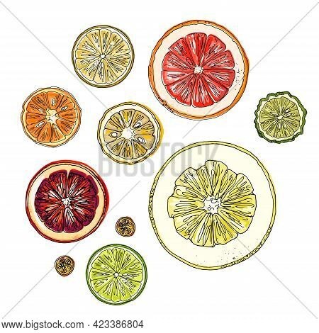 Pattern With Citrus Fruits Orange. Vector Food Sketch. Exotic Food Drawings Color