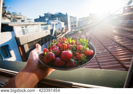 Strawberries On A Plate For Breakfast, In The Hand Of A Man Who Lives In The Attic Of The Old City.
