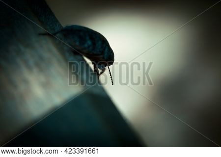 Horror Background In Thriller Style, Silhouette Of A Beetle In A Strange Scary Mystical Paranormal D