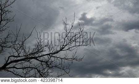 Creepy Cloudscape With Black Branches Of Dead Tree. Silhouettes Of Bare Tree Branches Against Dark B