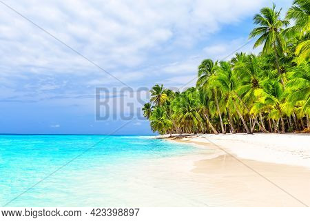 Coconut Palm Trees On White Sandy Beach In Saona Island, Dominican Republic. Vacation Holidays Summe