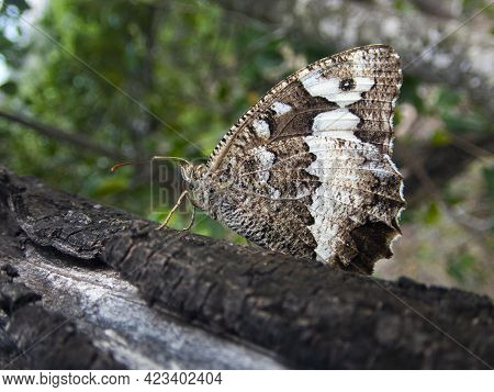 A Close Up View Of A Butterfly In A Forest Tree, Side View Of A Butterfly