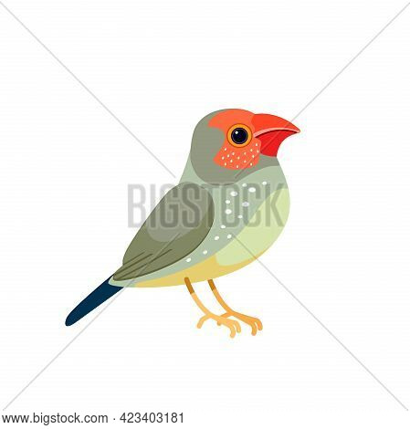 Star Finches Is A Bird Of The Group Neochmia In The Family Astrilder. Small Bird Cartoon Flat Style