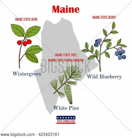 Maine. Set Of Usa Official State Symbols. Vector Hand Drawn Illustration